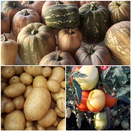 garden-pumpkin-potato